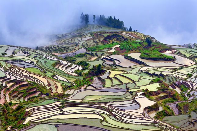 Atrakcje Chin - tarasy ryżowe