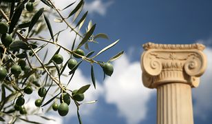 Według mitologii Atena podarowała ludziom drzewo oliwne