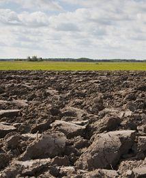 Na rynku gruntów rolnych rozmiar ma znaczenie