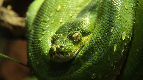 Python zyskuje popularność, w bogatych krajach szybciej