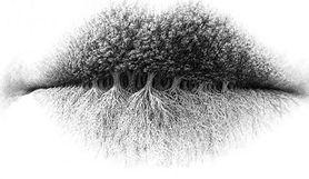 Usta, korony drzew czy korzenie? Co widzisz na obrazku? Psychologiczny test obrazkowy