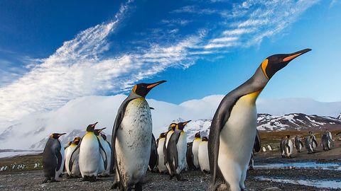 Windows 10 i WSL2: Jądro Linux będzie aktualizowane przez Windows Update