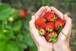 Ceny truskawek będą w tym roku wyższe? Optymistyczna wiadomość dla fanów czerwonych owoców
