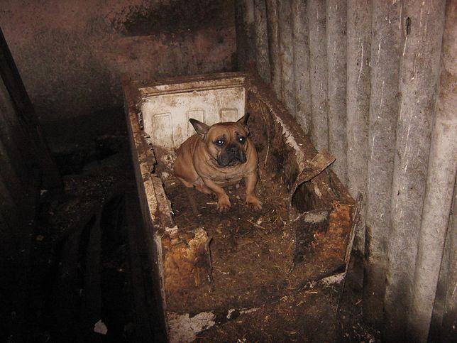 Właściciel zlikwidowanej w Radomiu hodowlo przekonywał, że lodówka to idealne miejsce dla psa