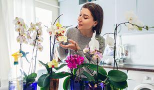 Jak zabezpieczyć rośliny podczas urlopu?