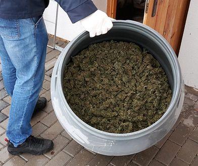 CBŚP zlikwidowało na Lubelszczyźnie profesjonalną uprawę haszyszu. Zabezpieczono też 42 kg marihuany