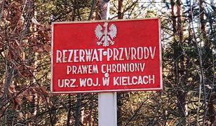 Rezerwat Krzemionki Opatowskie został utworzony w 1995 r.
