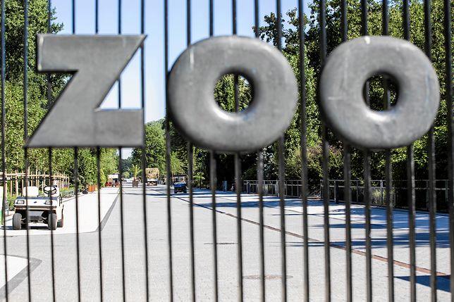 Jak ominąć kolejki do warszawskiego zoo? Teraz bilety kupisz znacznie szybciej
