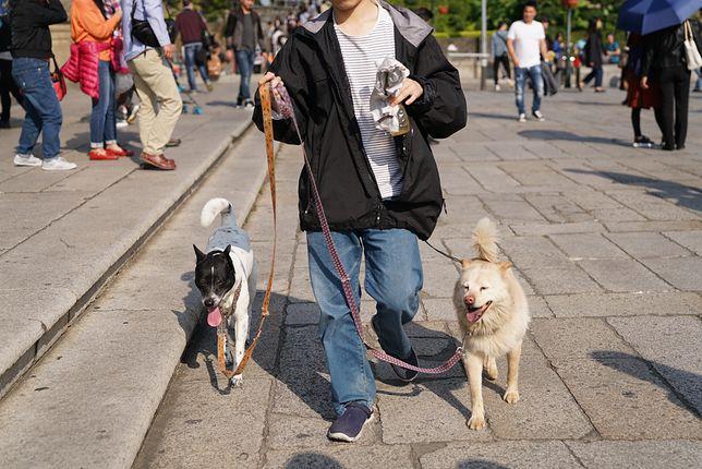 Hangzhou wypowiedziało psom wojnę. Wprowadzono szokujące przepisy