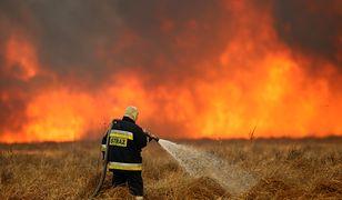 Pożar Biebrzańskiego Parku Narodowego.