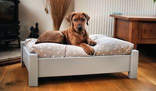 Zwierzę bez swojego łóżka przyjdzie do naszego. Dlatego warto zainwestować w legowisko dla psa albo leżankę dla kota.