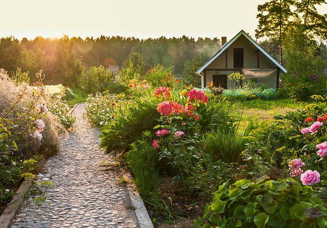 Harmonia w ogrodzie