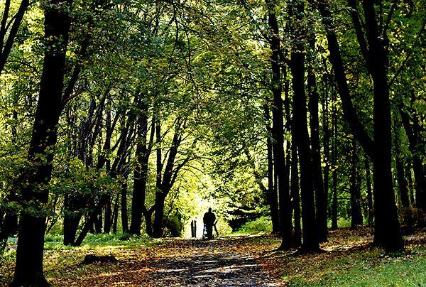 Będą odnawiać punkty piknikowe w Parku Śląskim. Możesz zdecydować, które!