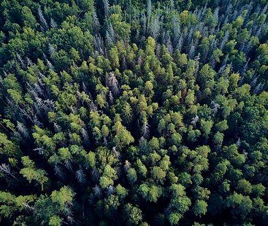Białowieski Park Narodowy. Spotkanie z żubrem i lasem pierwotnym