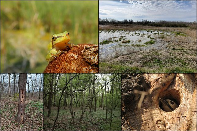 Wrocław. Obwodnica śródmiejska Sołtysowice unicestwi wiele gatunków cennych okazów flory i fauny. Ekolodzy apelują do prezydenta Jacka Sutryka o rezygnację z planów, które rozstrzygnąć się mają w połowie czerwca