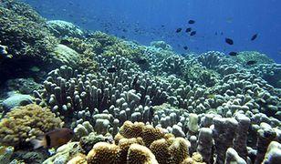 Rafy koralowe regulują klimat