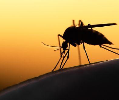 Komary tygrysie blisko Polski. Sprawdź, dlaczego są niebezpieczne i po czym rozpoznać te insekty