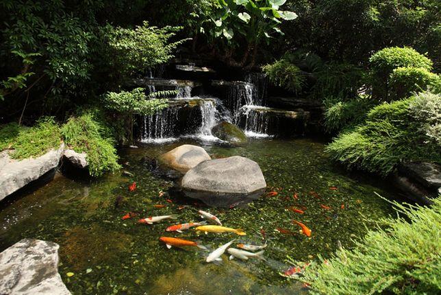 Oczko wodne - czy można zbudować je samodzielnie?