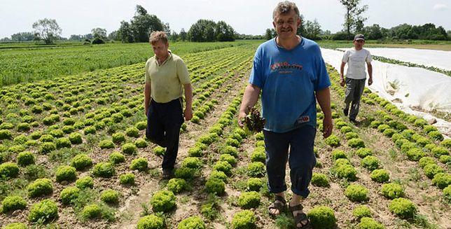 Spadły dochody rolników
