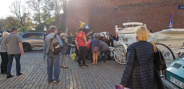 Upadek konia pod Wawelem. Dramatyczny widok