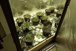 Marihuana rosła tuż przy stacji metra. Seria zatrzymań w stolicy