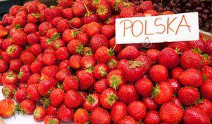 Prawie nikt nie chce zbierać polskich truskawek