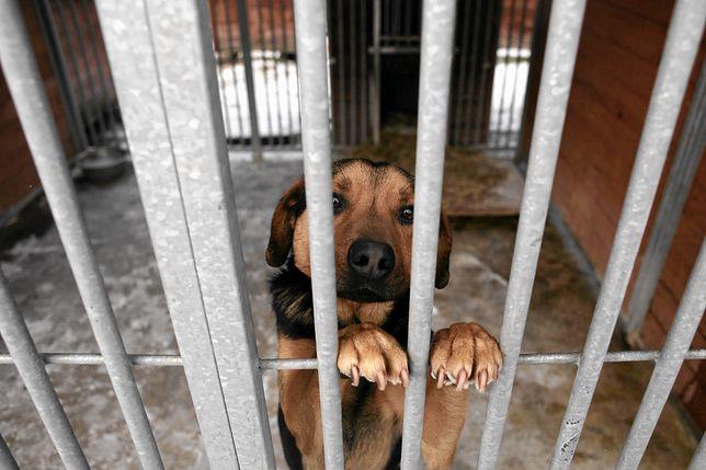 Kraków. Smutny rekord w schronisku. Jednego dnia oddano aż 41 zwierząt