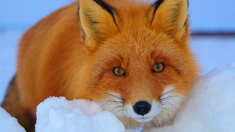 Firefox z nowymi ustawieniami: mniej kategorii to więcej przewijania