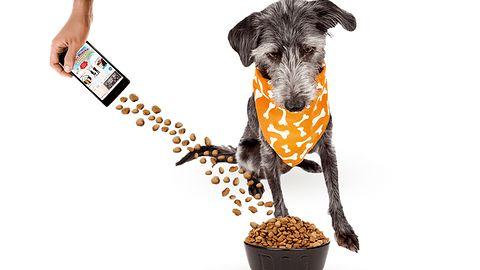 Dziwny ruch Ceneo. Chcesz pomóc psom w schroniskach? Podziel się swoimi danymi (aktualizacja)