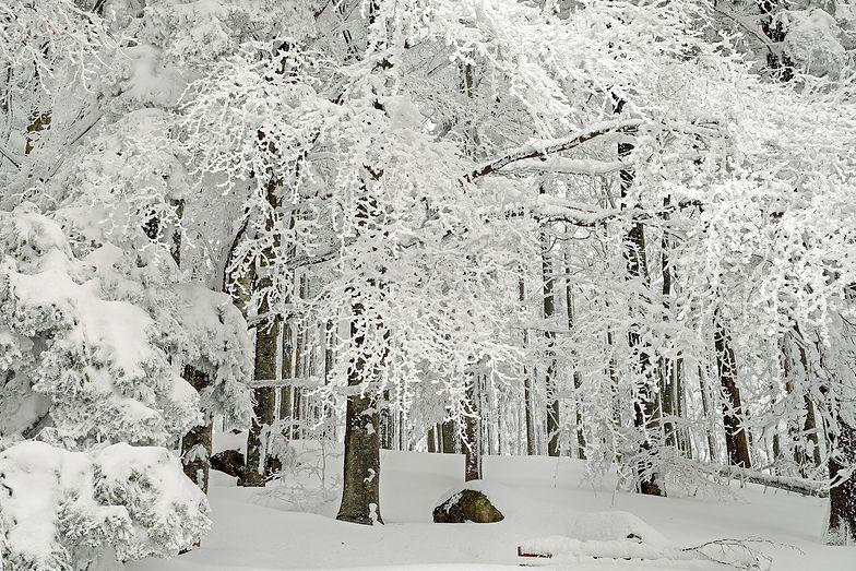 Kiedy spadnie śnieg? Nadchodzi atak zimy. Znamy datę