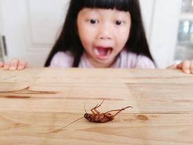 Turkuć podjadek – larwa, występowanie, wygląd. Jak się go pozbyć?