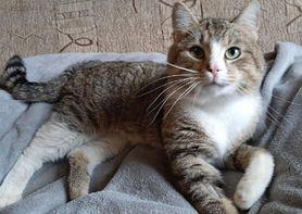 Walka o sprawność Borysa. Pomoc dla kotka jest na wagę złota