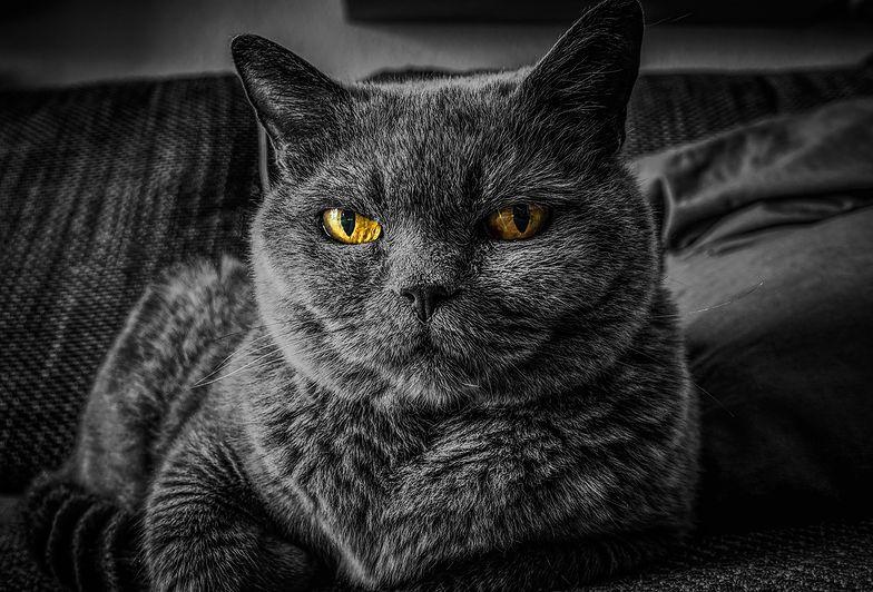 Sucha karma dla kota - jaką wybrać?