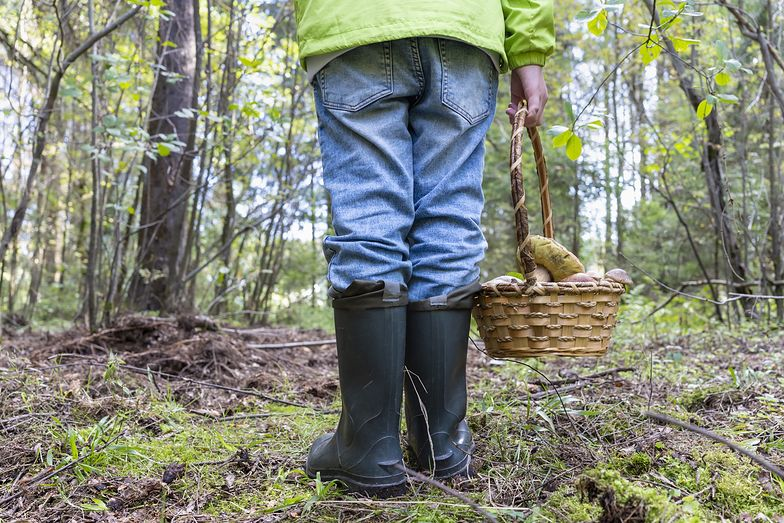 Makabryczne odkrycie w lesie. Grzybiarze wezwali policję