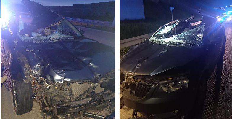 Śmiertelny wypadek na A1. Samochód zderzył się z łosiem