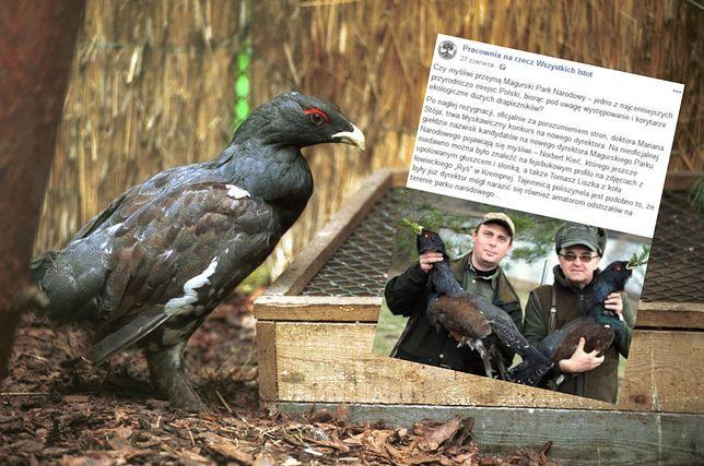 Szef koła łowieckiego został dyrektorem Magurskiego Parku Narodowego. Robił sobie zdjęcia z upolowanym głuszcem