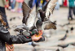 Prawie 30 martwych ptaków przed blokiem. Wiadomo co je zabiło