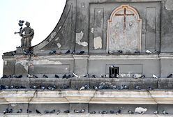 Księża wściekli na pomysł PiS. Gołębie odchody zapaskudzą dachy
