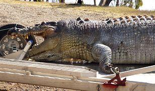 Turyści utknęli na terenie, na którym utknęli grasują krokodyle