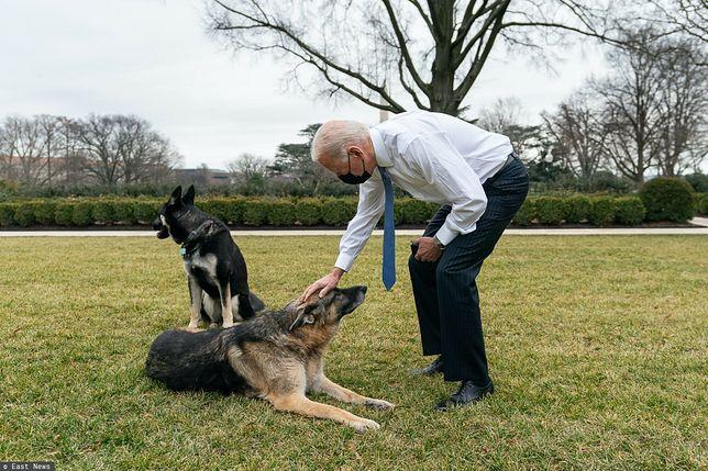 """Joe Biden przekazał smutną wiadomość. Zdechł jego pies Champ. """"Był wiernym kompanem uwielbianym przez całą rodzinę"""""""