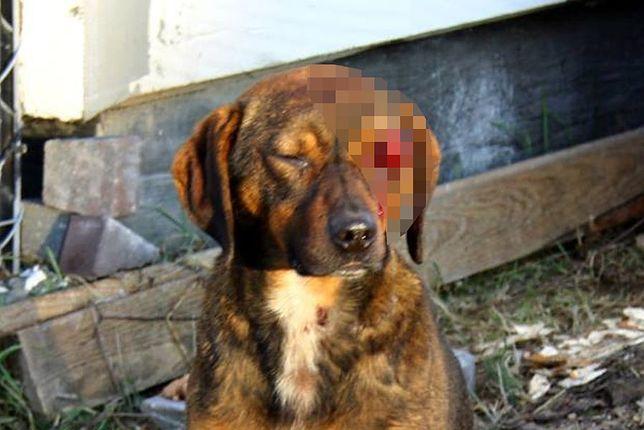 Wydłubali psu oko!