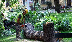 Wycinka drzew ma być łatwiejsza. PiS chce zmienić przepisy