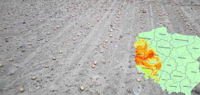 W zeszłym roku susza pojawiła się później i dotknęła przede wszystkim rolników z zachodu kraju.