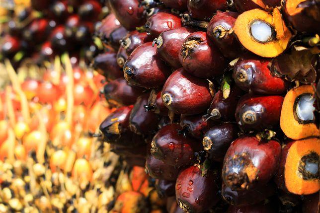 Olej palmowy - skąd te kontrowersje?