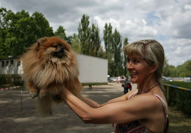 2500 psów 223 ras na wystawie w Starej Miłośnie