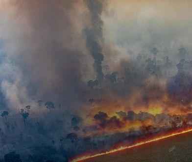 Amazonia nadal w ogniu. Wybuchło 2 tysiące nowych pożarów
