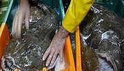 Greenpeace ocenił sieci handlowe za sprzedawane ryby