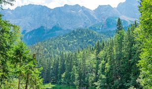 Las Bawarski. Pozwólmy naturze być naturą