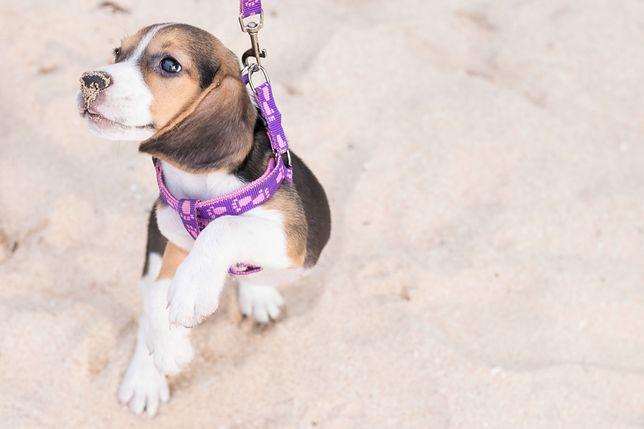 Wyspa dla porzuconych psów. Karaibski raj dla zwierząt