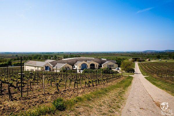 Węgry - odwiedź tokajski region winiarski